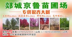 郯城京鲁苗圃场图片