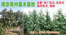 南京有州苗木基地图片