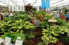 园林耐阴药用植物大全,能忍耐适度的荫蔽或弱光条件,苗木套种必知!