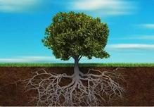 秋季施肥有很多种,可以穴施、沟施等,但是难免都会伤到根系,造成苗木断根怎么办?