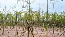 苗木为什么要移植?该怎么移植?移植的作用?移植的时间?苗木移植的次数与密度?