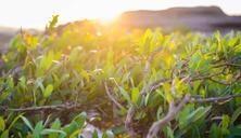 教你7个方法获得较高的生根率和较好的根系,让苗木生根又快又好!