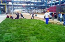 好土方能出好苗,培育品质优良的精品苗木,8个字讲透苗木种植土壤问题!