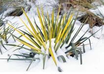 """观赏草在景观中的应用将愈发受到重视,应用形式也会更加多样,那观赏草如何""""可持续应用""""?"""