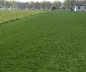 东安万亩草坪和苗木花卉基地