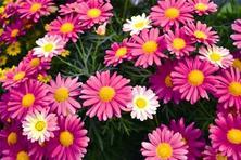 透過美加州春季花展的新奇品種,看草花發展趨勢及對未來流行趨勢的預判