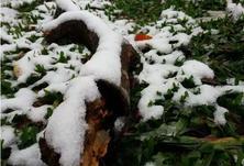 雪后园林苗木该如何管理?文章给大家总结了雪后园林苗木应对5大绝招!