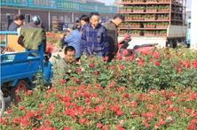 如果你来夏溪花木市场,家庭园艺一定要瞧一瞧了解花木行情
