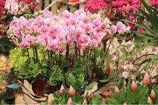 组合盆栽,平日里你露的脸儿还不够,组合盆栽绝不是几种花的简单堆放!