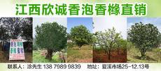 江西欣誠香泡香櫞直銷(夏溪市場25-12.13號)圖片