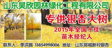 山东昊欣园林绿化工程有限公司
