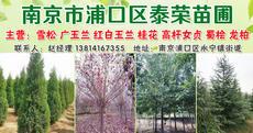 南京市浦口区泰荣苗圃场图片