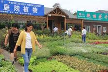 从小庭院市场看用苗行情,以今年上半年的夏溪花木市场为例,简要作出分析