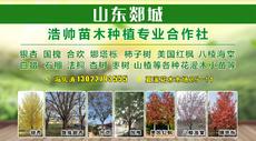山东郯城浩帅苗木种植专业合作社图片
