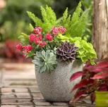 """8月中旬,来夏溪花木市场听关于""""组合盆栽""""的故事,植物组合搭配"""