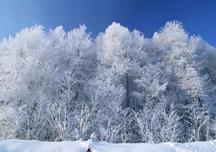 若苗木防寒、防病虫害管理较好,第二年苗木的生长事半功倍,冬季苗木养护管理必备知识