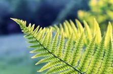 最全的植物病害归类及配方用药