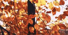 中小苗企要及早布局应对寒冬,秋天来了,寒冬也就快到了,但愿我们能挺过寒冬迎来最美好的春天