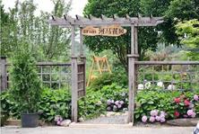 """夏溪花木市场花园专区,告诉你什么是""""向往的生活""""!"""