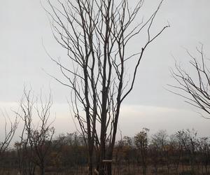 江苏春秀草坪苗木供应