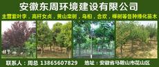安徽东周环境建设有限公司图片