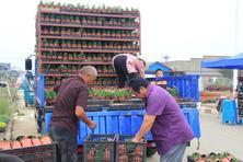 金秋十月,夏溪花木市场草花行情如何?来实地感受这里的草花市场动态