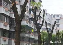 行业资讯:擅自截除树木主干、去除树冠的现象将被重罚