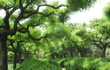 要打通苗木生产与绿化工程对接苗木生产是基础,应用是目的,设计是关键