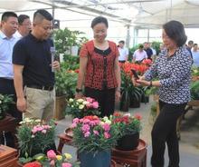 市场动态——阜宁县村企领导参观考察夏溪花木市场
