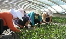 苗木人须知培育好苗子的6种新技术,最新的苗木种植生产技术的应用