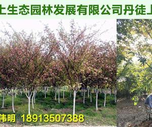 蘇州窯上生態園林發展有限公司丹徒上會苗圃