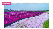 园艺嘉年华:专类园之森禾,现场教你如何应用北海道芝樱