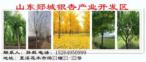 山东郯城银杏产业开发区
