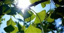 秋冬交替时如何养护苗木