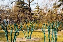 防寒是苗木安全越冬养护的重要环节,苗木防寒方法多,涂白只是其中一!