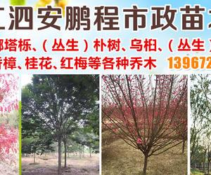 浙江泗安鵬程市政苗木場