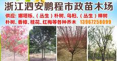 浙江泗安鹏程市政苗木场图片