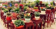 夏溪花木市场花卉参展世园会,探索花木转型进行时