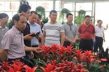 陕西省安康市农企领导莅临夏溪花木市场参观考察!