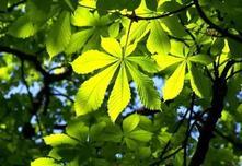 什么是行道树?常见行道树知识汇总,是景观人就必须知道!