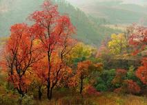 乡土植物实用性强、易成活、利于改善当地环境,最常见的乡土植物,你怎能都不认识?