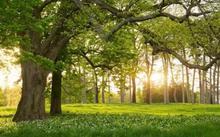 """""""种树无时,只要树不知"""",这才是大树全年种植秘诀!"""