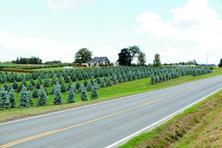 种苗或工程苗盈利能力,或将成为苗木企业持续发展的关键点?