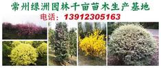 绿洲园林千亩苗
