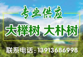 常熟碧溪新区杭氏园艺场
