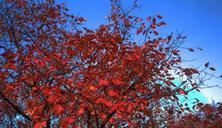 市场行情:夏溪花木市场乔灌木、乔木最新价格指南,仅供参考