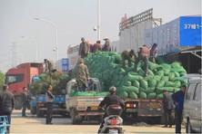 行业竞争与市场管理下,今年春天苗木行情真的是不一般的一般般