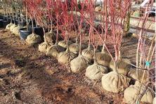 """冬季养护苗木管理工作:""""三分种,七分养"""",冬季养护重点早知道"""