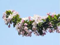 园林中栽培的灌木多以观赏为主,园林树木冬季修剪要点之灌木篇