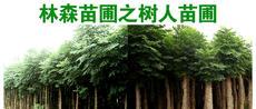 林森苗圃之树人苗圃图片